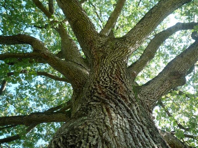 interroger ses racines